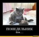 Αлександр Φедотов фото #40