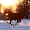 КCК Нимб(верховая езда,прокат,лошади,фотоссесии)