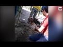 Собака пропала… Бедняжка Лилу застряла в трубе и провела там 5 дней!