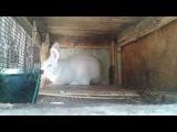 Клетка для кроликов  своими руками,