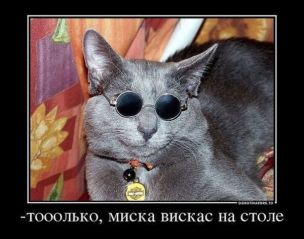 http://cs619520.vk.me/v619520600/d82a/2SaNnMhyLgs.jpg
