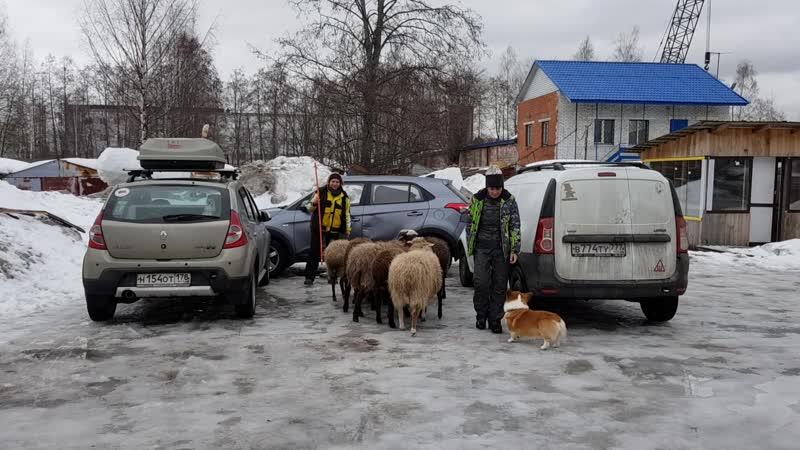 Загон для овец из сподручных материалов