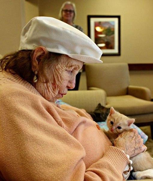 Приют для животных в Аризоне объединился с домом престарелых, чтобы сделать счастливыми и брошенных котят, и пожилых людей.