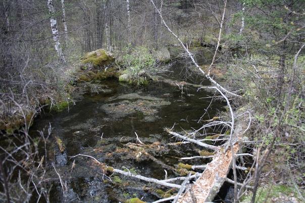 Но есть и не совсем красивые места, скорее брошенные, поросшие. Такое бывает всегда в природе.
