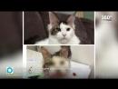 Скандал в Воронеже породистую кошку за 500 тыс нашли в кустах на обочине mp4
