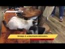 Лондонская полиция раскрыла правду о кошачьем мяснике