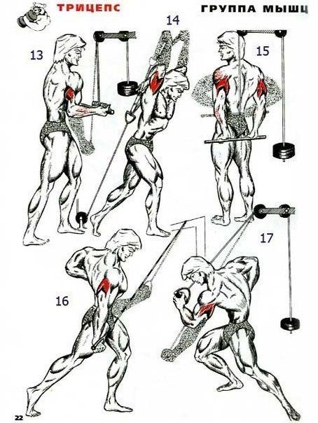 упражнения картинках скачать силовые