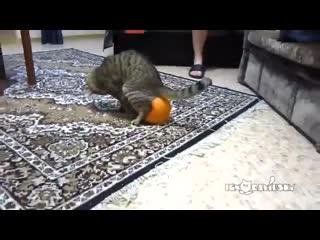 Неравный бой кота и шарика