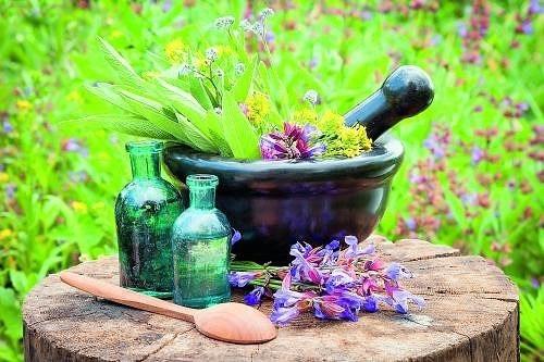 Зеленая аптека - 6 лекарственных трав на вашей клумбе