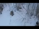 Охота на зайца Зима, тропление