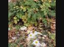 А я люблю осень с её неповторимым ароматом м