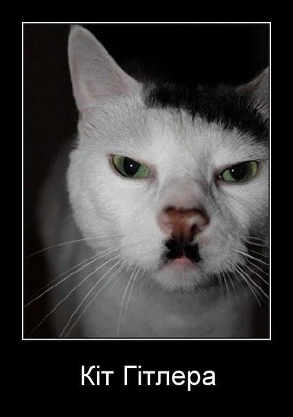 Кіт Гітлера