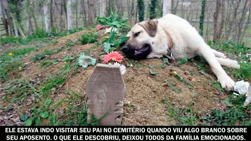 Ele estava indo visitar seu pai no cemitério quando viu algo branco sobre seu aposento...