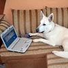 """Дрессировка собак """"Белый пес"""""""