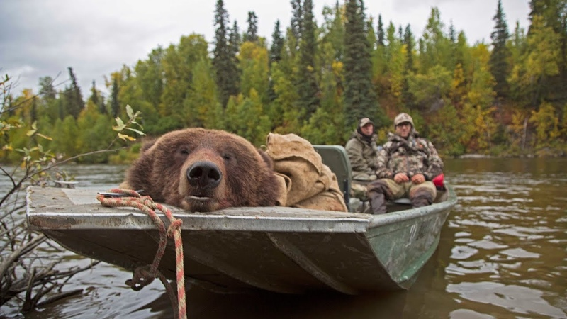 Alaskan brown bear hunt in the fall Conservation Explained