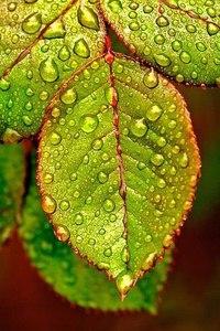 Отцвели цветы, падают листья, птицы молчат, лес пустеет и затихает.ОСЕНЬ. - Страница 6 TCdxn0GWllk