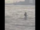 Американец в деловом костюме переплыл Гудзон на доске для серфинга