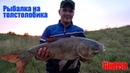 Рыбалка на толстолобика Ловля толстолобика на технопланктон или как меня обловили BigFish