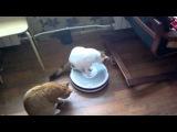 Кот и робот пылесос =