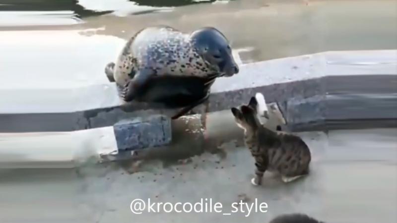 Эта вспыльчивая кошка