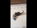 Смешной 😆 котик 🐈 Гуффи .