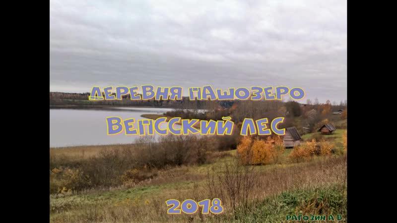 Деревня Пашозеро