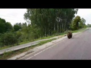 ⚠ Псковская область Бежаницкий район деревня Ашево