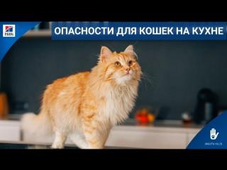 Опасности для кошек на кухне