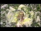 Белая черемуха - Анна Герман и ВИА