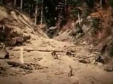 Patterson/Gimlin Bigfoot Film - Complete Version