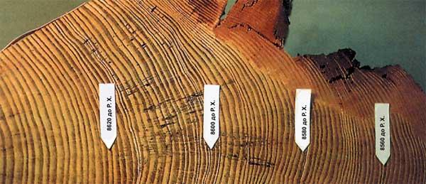 Провести экспертизу дендрохронологию дерева