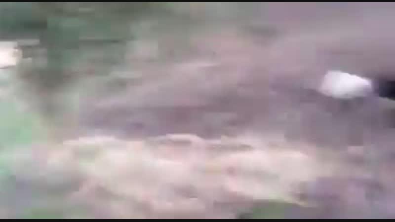встреча с кабанами