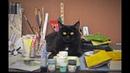 №37 видеоклип для выставки кошек онлайн PCA Осень 2018 Мейн кун
