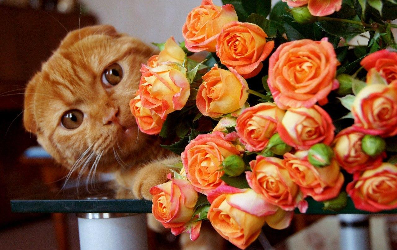 Картинки букет цветов для оли способен
