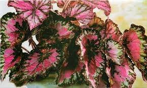 чернаямагия - Магия растений. Магические свойства растений. Обряды и ритуалы. Амулеты и талисманы из растений.  8hZ6S7WR11o
