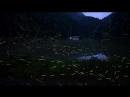 Япония, Светлячки в лесах, Japan, fireflies in the woods