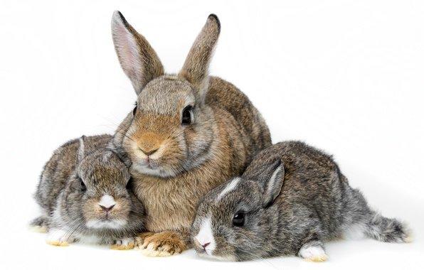 Как правильно разводить кроликов