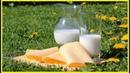 Молоко продлевает жизнь утверждают ученые