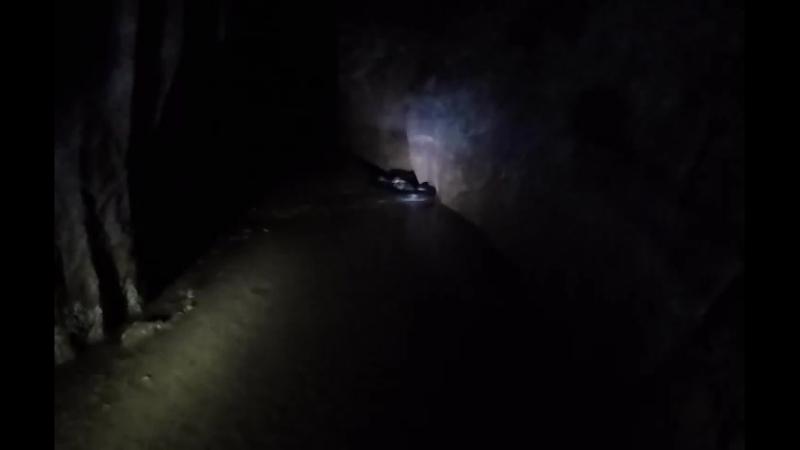 Кобра в пещере ест лягушку