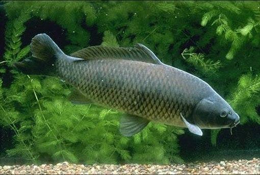какая приманка лучше для ловли рыбы