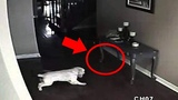 5 Dogs That Saw Something Their Owners Couldn't See Ghosts, ESP, &amp Paranormal