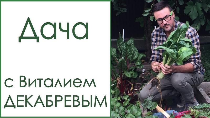 Дачный канал телеведущего Виталия ДЕКАБРЕВА