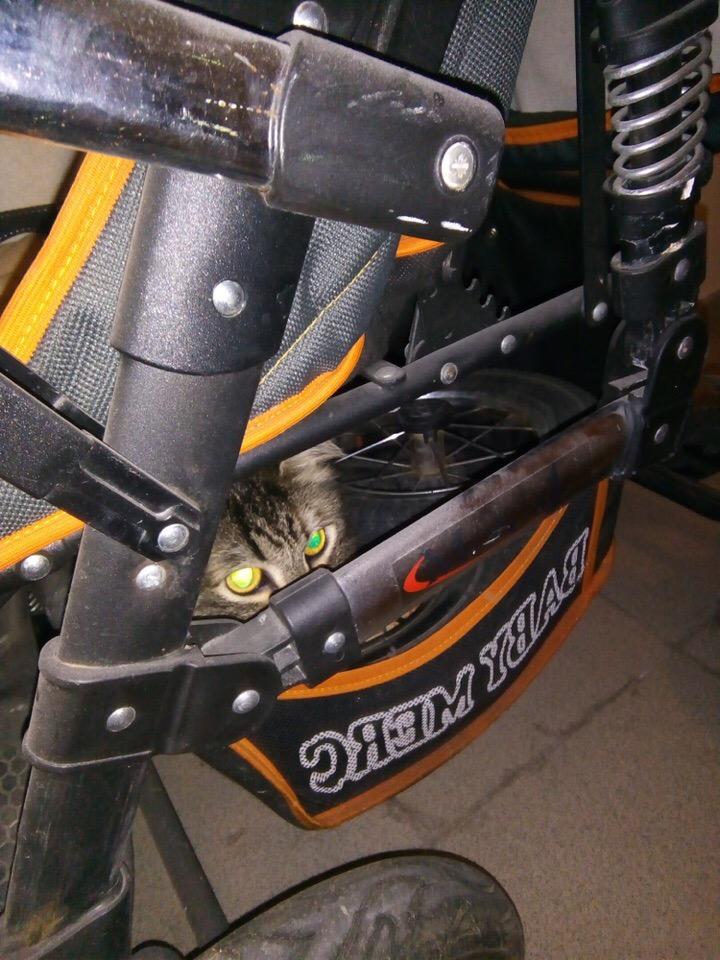 На бакинской 19а сидит котик(кошечка) чья потеряшка?