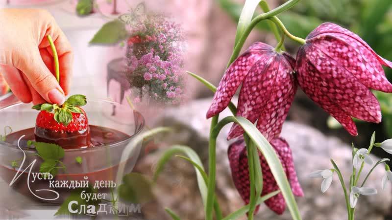 С Днем рождения в марте красивое видео поздравление и красивая видео открытка_VIDEOLENT.RU