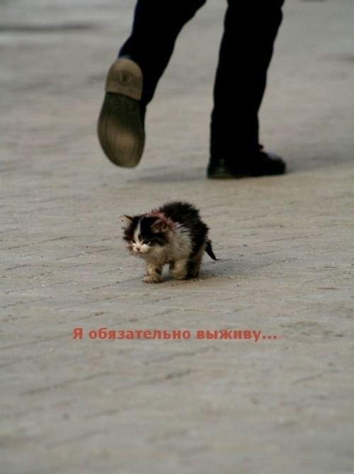 'Не бойтесь врагов - в худшем случае они могут убить.