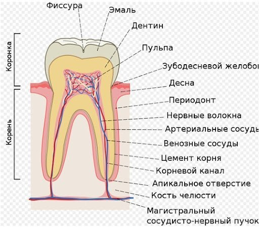 клиника смайлик: