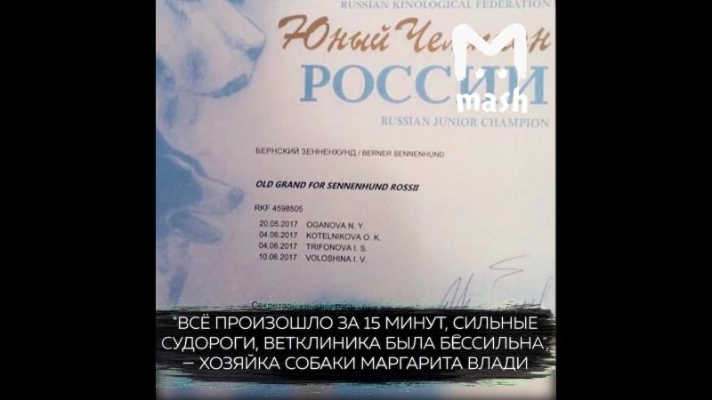 В Новой Москве неизвестные насмерть отравили девять собак