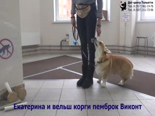 Екатерина и вельш корги пемброк Виконт. Занятие по дрессировке ОКД: обучение собаки движению рядом. Тольятти, 16 декабря 2018.