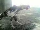 Coq algérien danse sur cheikh chaib lol