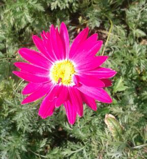 Цветы у Ликки WOHPZg_oePA